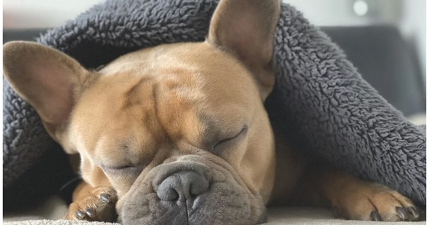 How much dosh the UK's designer dog craze Could Cost You