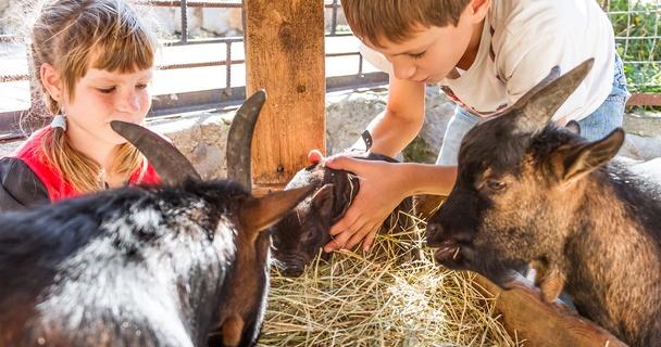 children petting goats