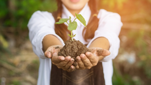 How to save money on your garden