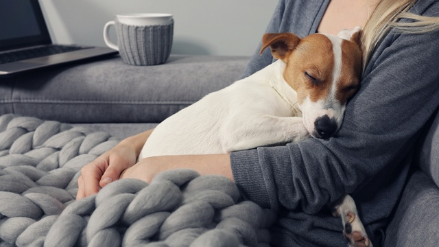 Renters with 'well behaved pets' may now find it easier to get an agreement