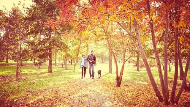 10 cheap autumn days out