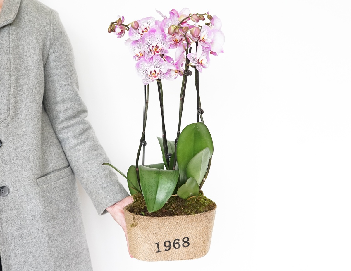 Is a plant a good birthday gift?