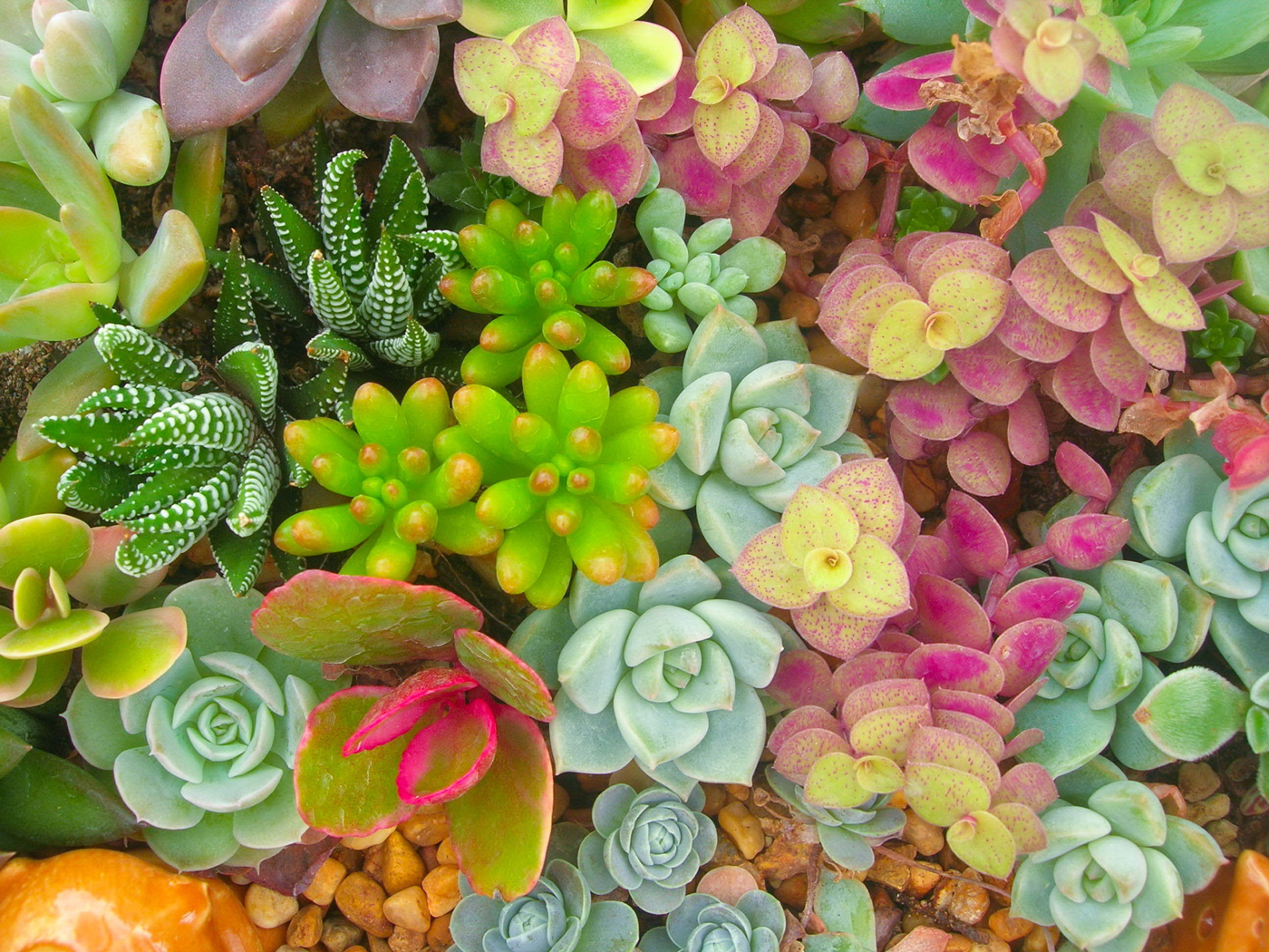 green-roof-plants-post.jpg