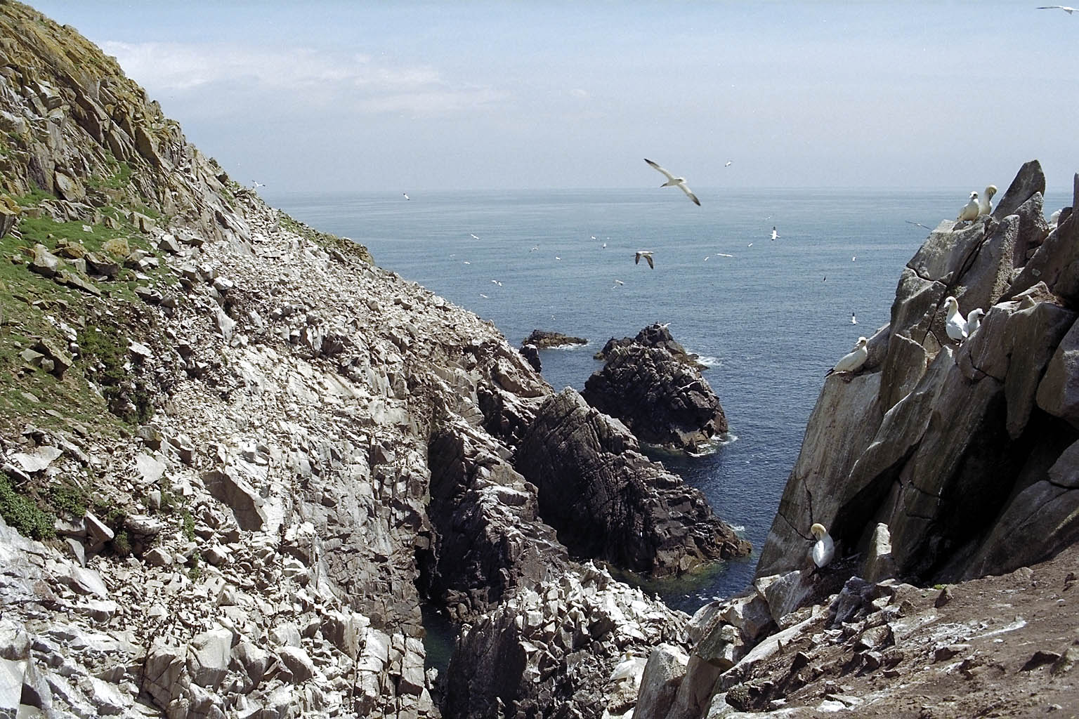 Seeing the Saltee Islands is an awesome thing to do in Ireland