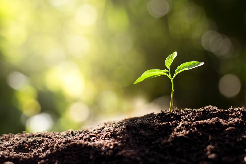 green-roof-biodiversity-seedling