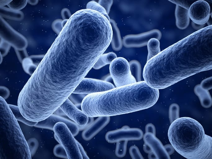 bacteria101.jpg