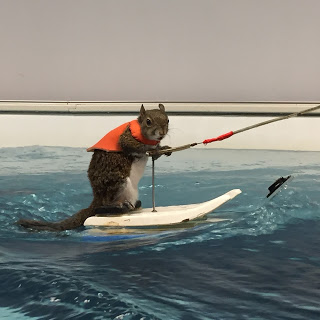 Twiggy the Waterskiing Squirrel in the Elite Endless Pools swimming machine