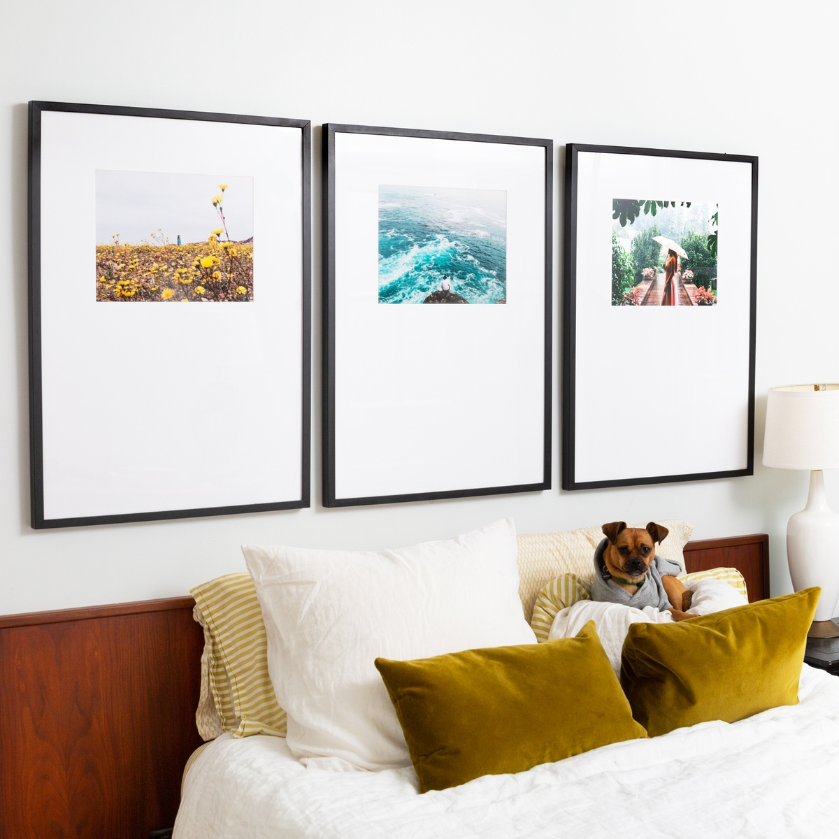 small dog on pillows under triptych frames
