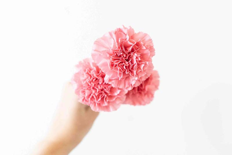 The Official Mother's Day Flower