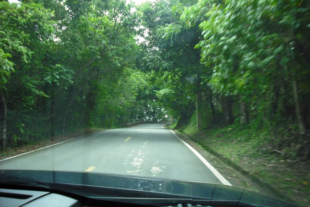 You must drive to El Yunque, Puerto Rico's rainforest