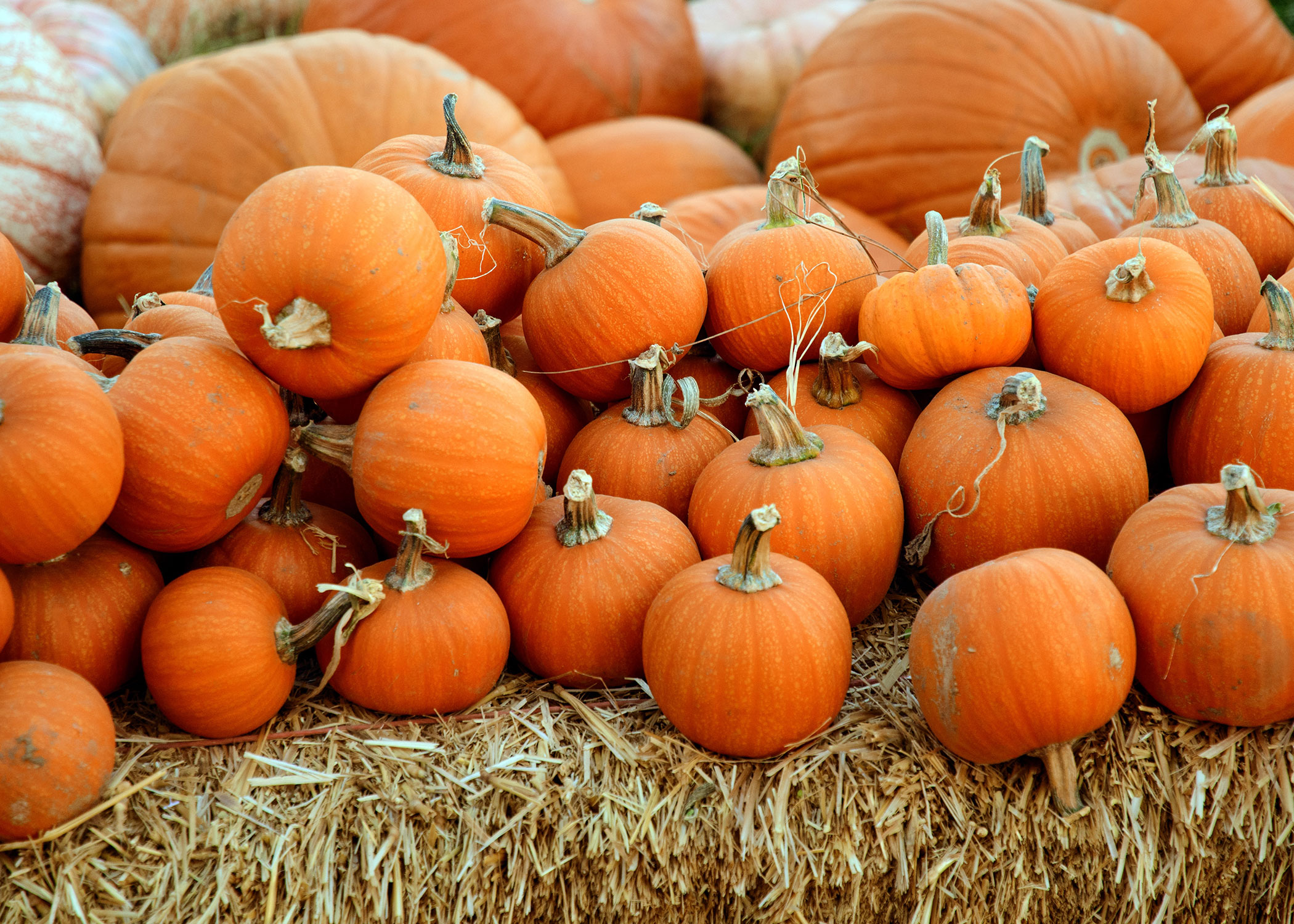 Image of 7 Ways to Celebrate Fall in Atlanta