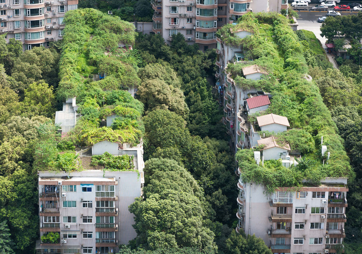 Green roofs in an urban, resilient area