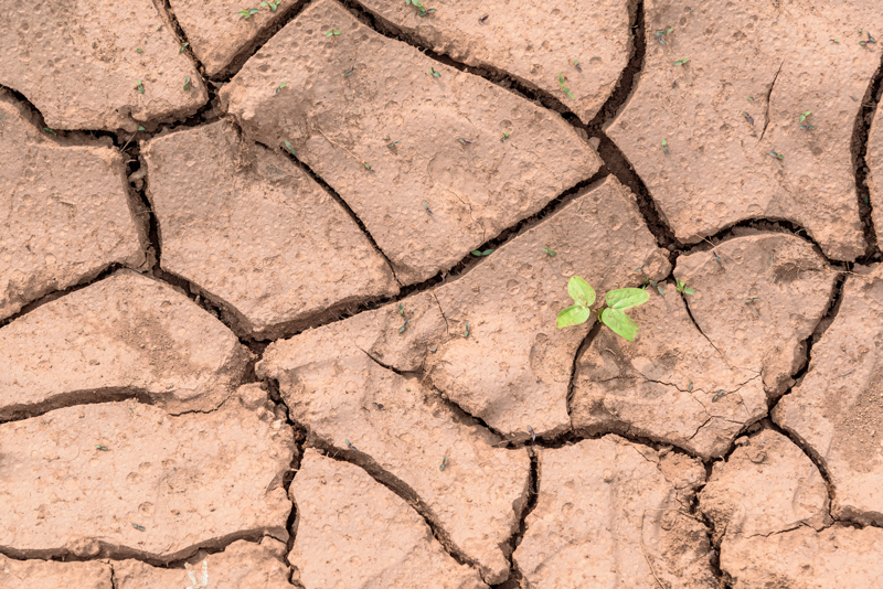 urban-resilience-plant-in-dry-soil