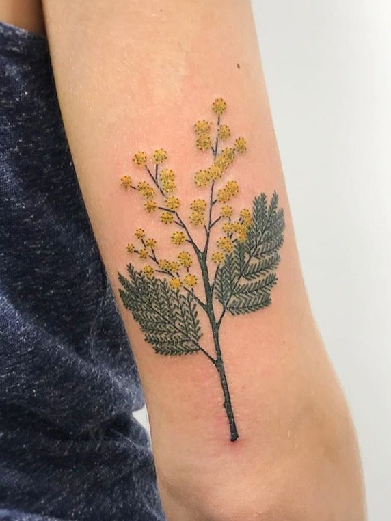 Acacia Mimosa Wattle flower tattoo