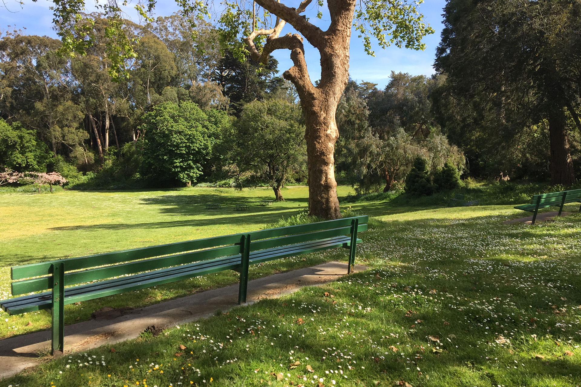 Bench at Golden Gate Park