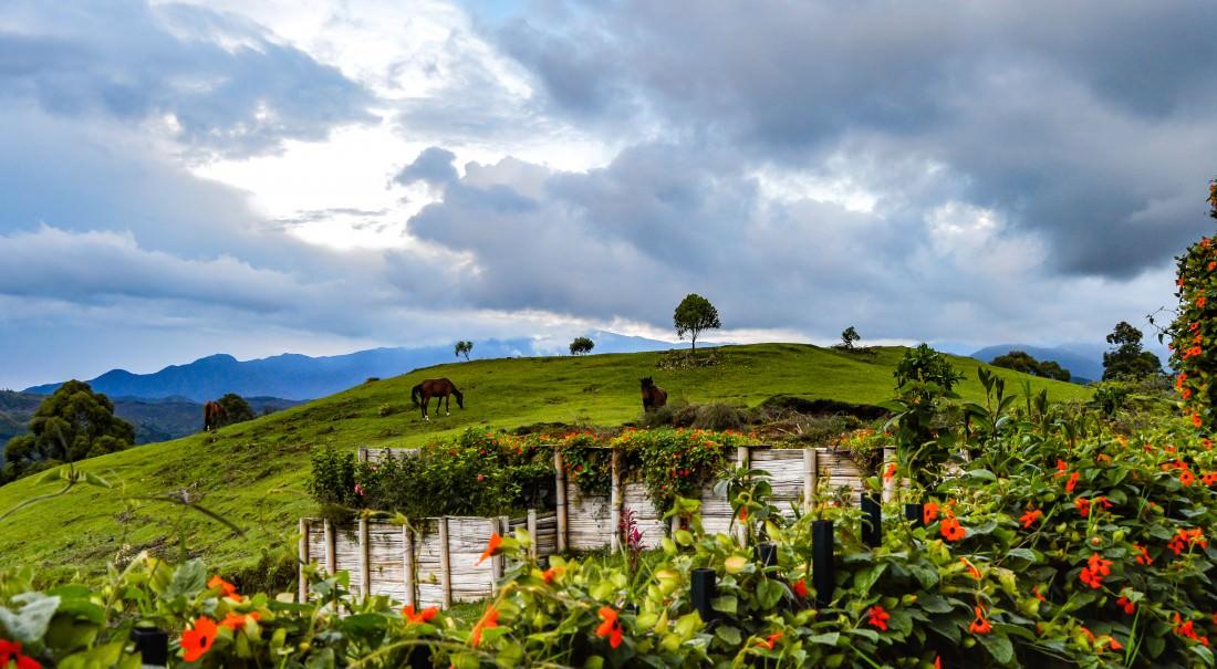 Horseback Solento Colombia