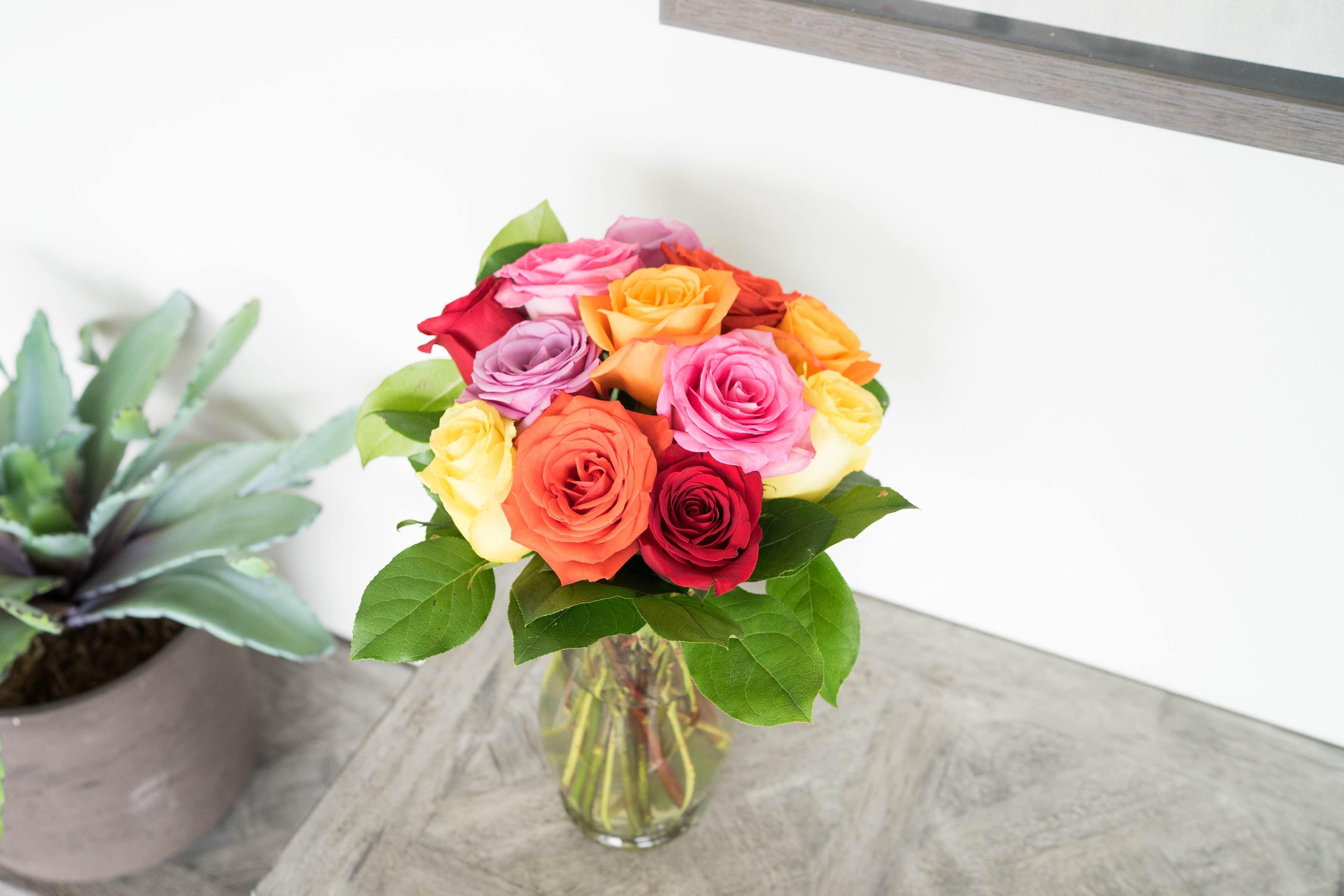 wild rainbow roses.jpg