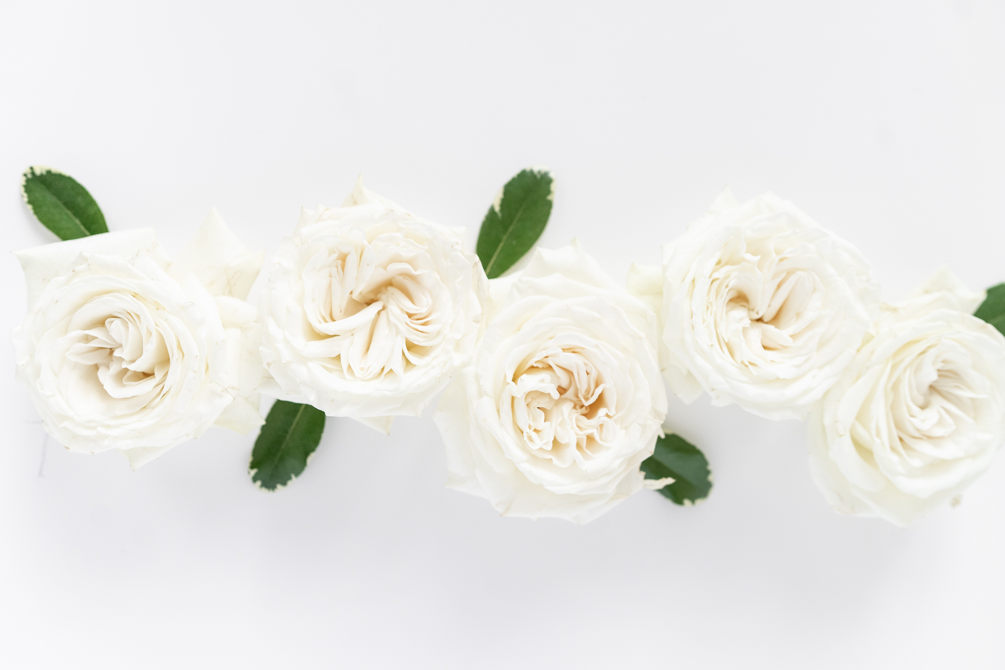 What does White roses mean?